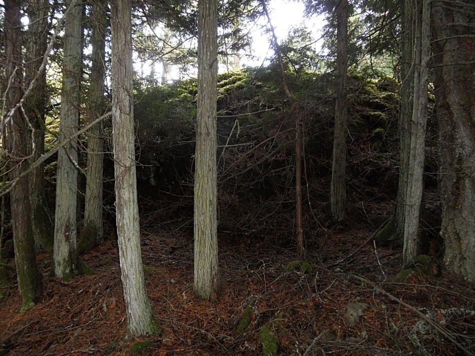 Looking for Cedar